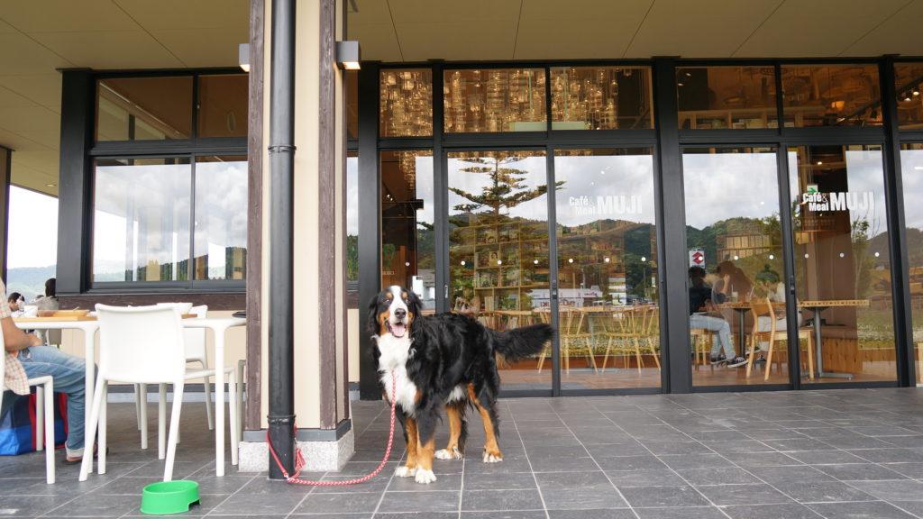 無印良品「里のMUJI みんなみの里」はカフェ・レストラン・本・農産物直売所もあり、子ども・ペットも楽しめる房総半島の千葉県鴨川市の道の駅16
